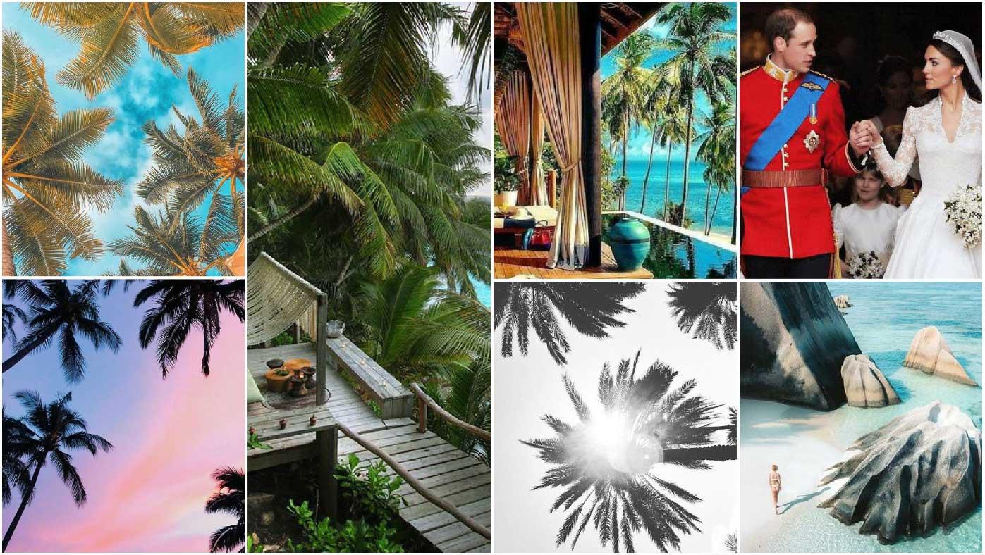Seychelles-daylight-jungle-Inspiration